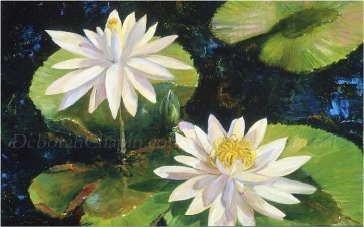 White Water Lilies Original Oil Painting, Floral Art, Plein air painting