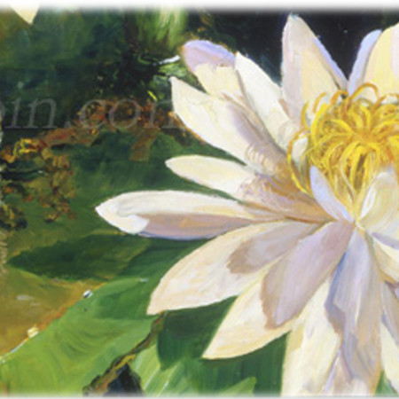 White Water Lillies museum floral art canvas giclee by Deborah Chapin