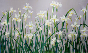 oil painting auction, Japanese White Irises, 16x24 plein air oil, Deborah Chapin