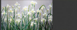 Japanese White Irises, Original is 16x24 plein air oil, Deborah Chapin