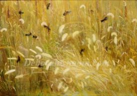 Canvas Art Prints, Dancing Wheat, Art print by Chapin